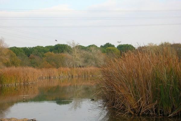 Uno de los lagos del Parque del Alamillo (Sevilla, España)