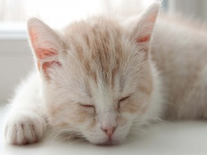 Postal: Gatito durmiendo