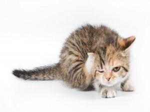 Postal: Gatito guiñando un ojo