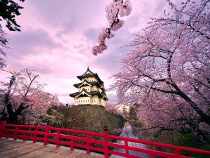 Edificio japonés entre cerezos en flor