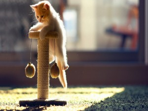 Gatito con su afila-uñas