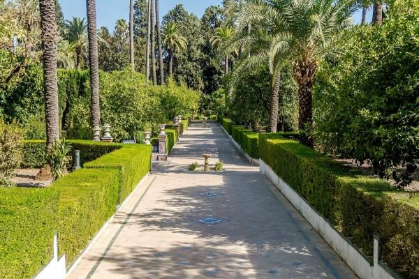 Jardines de los reales alc zares de sevilla espa a 17728 for Jardin botanico en sevilla