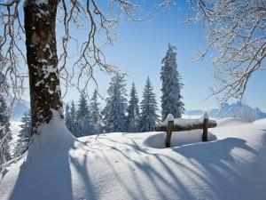 Postal: Paisaje cubierto de nieve
