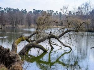 Lago de pesca Walldorf (Alemania)