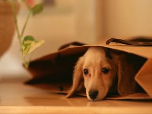 Perro dentro de una bolsa