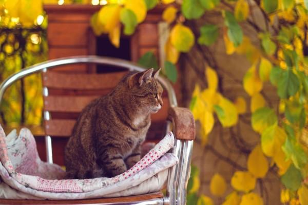 Un gatito sobre una silla
