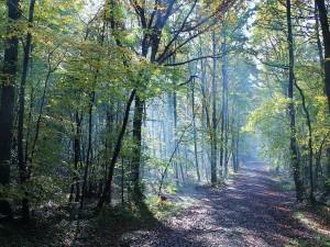 Postal: Camino en el bosque de Grimbosq (Calvados, Francia)