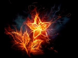 Postal: Flor en llamas