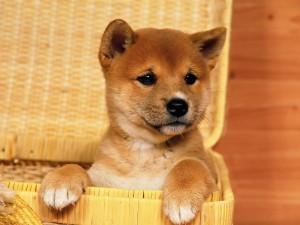 Perrito dentro de una cesta