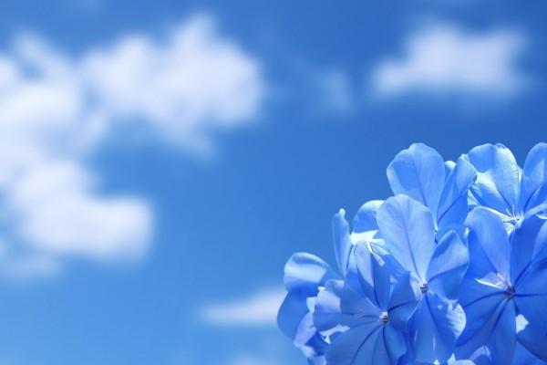 Hortensia y cielo azul