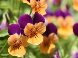 Postal: Flores con pétalos naranja y violeta