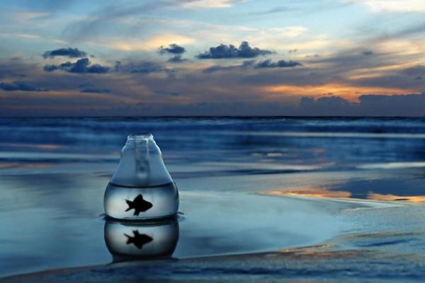 Pez en una pecera en la orilla del mar