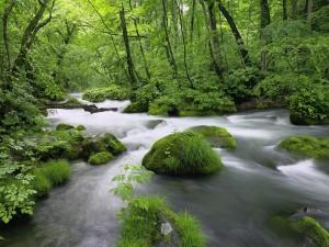 Postal: Río en el bosque