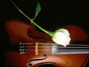 Postal: Una rosa y un violín