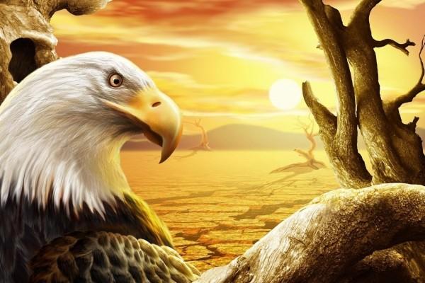 Águila en el desierto
