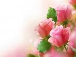 Rosas color rosa