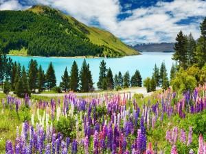 Pinos y flores cerca del lago