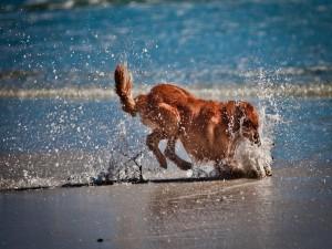 Perro jugando en el agua