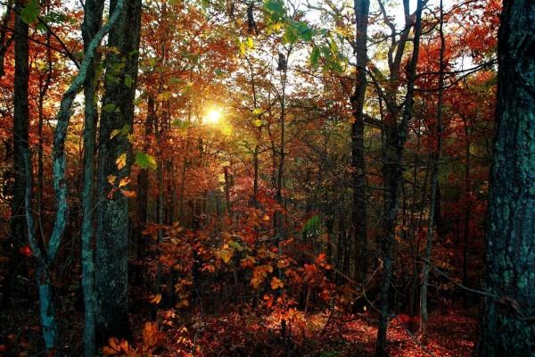 Cae la tarde en un bosque otoñal