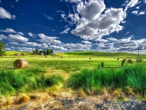 Rollos de pastura y casas rurales