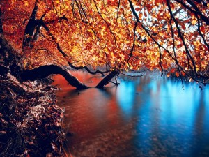 Postal: Ramas de árboles dentro del agua