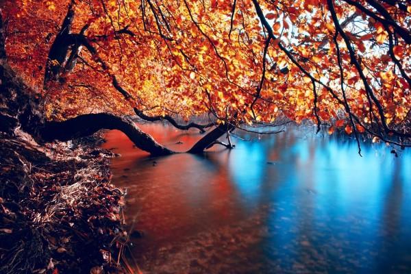Ramas de árboles dentro del agua