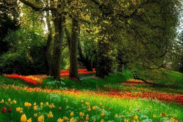 Parque cubierto con flores de colores
