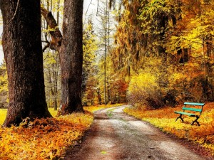 Postal: Banco para contemplar el paisaje de otoño
