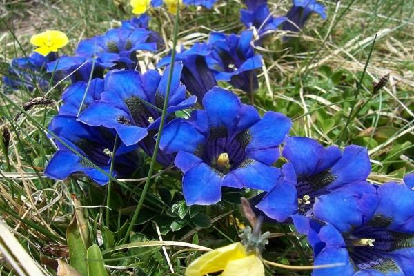 Flores azules en Los Apeninos (Italia)