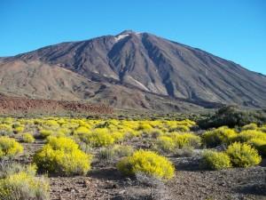 El Teide rodeado de Hierba Pajonera (Islas Canarias, España)