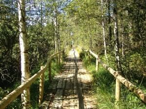 Postal: Sendero en el Bosque Negro (Alemania)