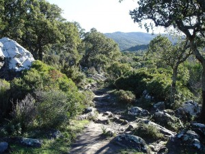 """Postal: Camino de """"el Picacho y el Aljibe"""""""
