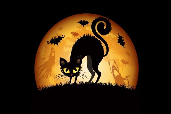 Gato negro en Halloween