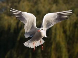 Postal: Gaviota en el aire