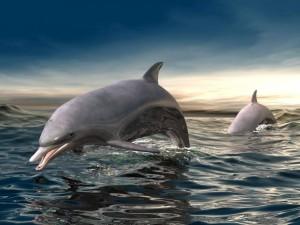 Postal: Delfines 3D