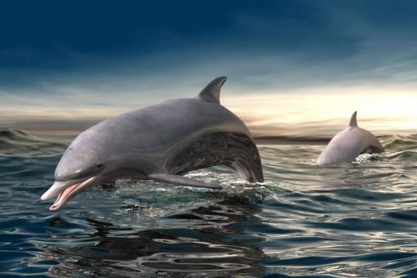 Delfines 3D