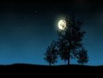 La luna iluminando los árboles