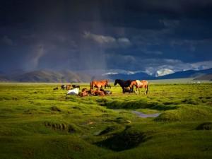 Postal: Caballos en la pradera