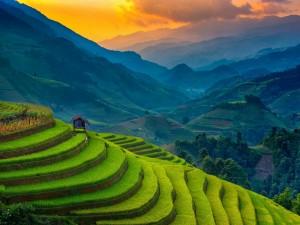 Postal: Cultivo de arroz en terrazas