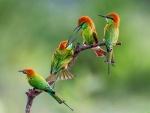 Bonitos pájaros de colores