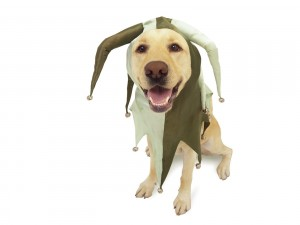 Postal: Perro disfrazado de bufón