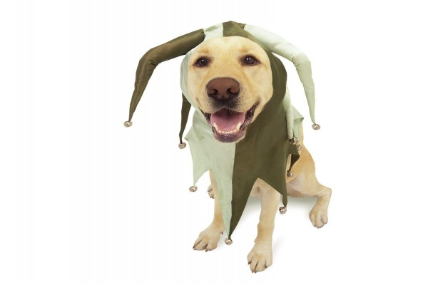 Perro disfrazado de bufón