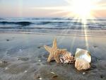 Elementos marinos en la orilla del mar