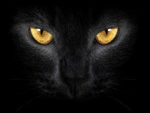 Postal: Gato negro con ojos dorados