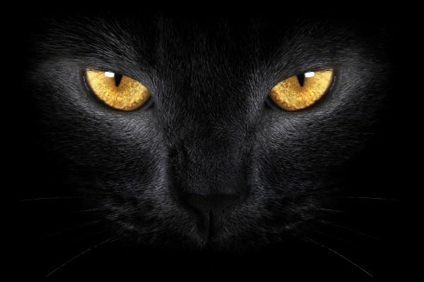 Gato negro con ojos dorados