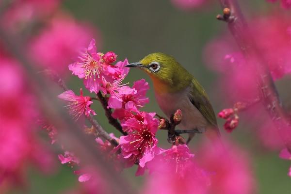 Pájaro en una rama con flores rosas