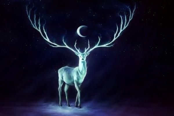 Ciervo nocturno