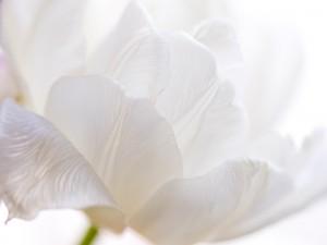 Delicada flor blanca