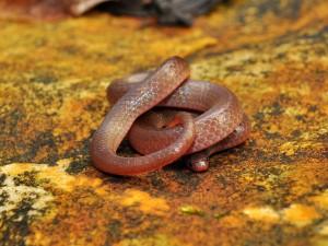 Postal: Serpiente en una roca