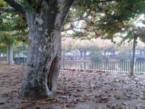 Postal: Caen las hojas
